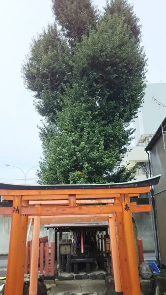 島原大銀杏 / 京都ブログガイド