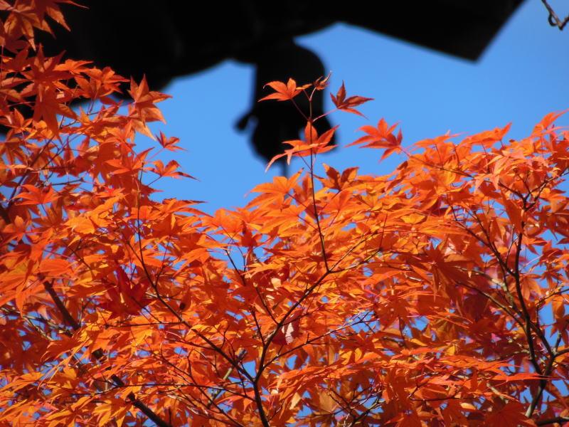 京都11月イメージ/京都 ブログガイド