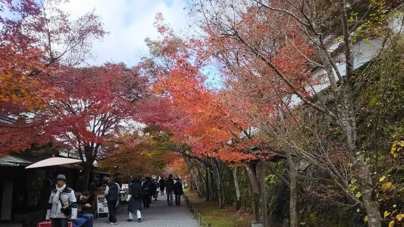 三千院3 / 京都 ブログ ガイド