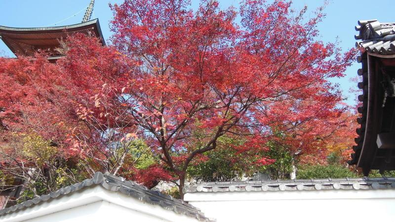 三明院2 / 京都 ブログ ガイド