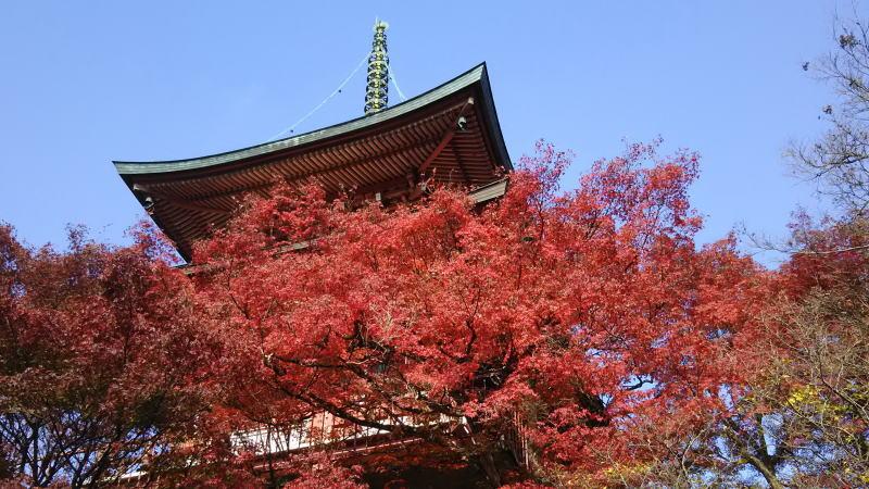 三明院3 / 京都 ブログ ガイド