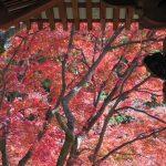 三明院6 / 京都 ブログ ガイド