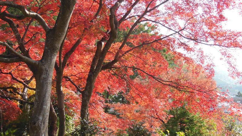 三明院9 / 京都 ブログ ガイド