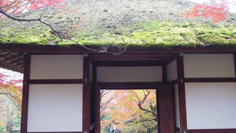 常寂光寺14 / 京都 ブログ ガイド