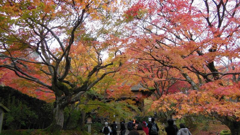 常寂光寺3 / 京都 ブログ ガイド