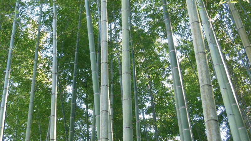 応挙竹林 / 京都 ブログ ガイド