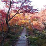 宝筐院2 / 京都 ブログ ガイド