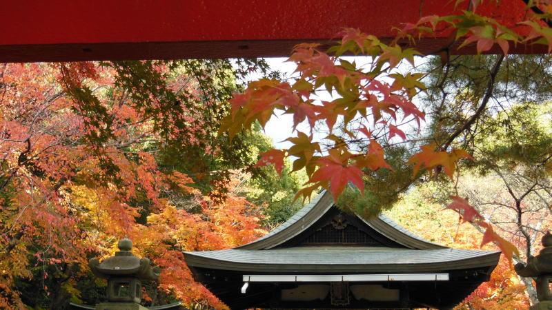 竹中稲荷社4 / 京都 ブログ ガイド