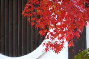 2017年11月 京都イベント情報 / 京都ブログガイド