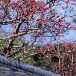 2018年3月 京都イベント情報 / 京都 ブログガイド