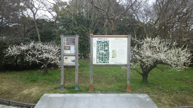 京都御所 梅3 / 京都 ブログガイド