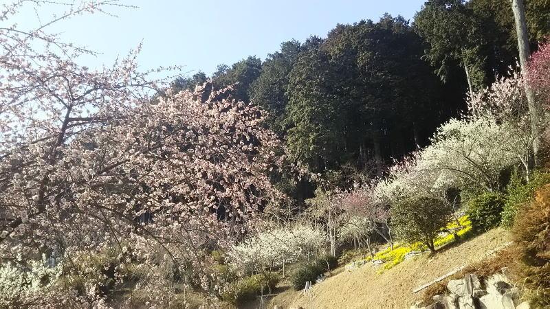 石山寺22 / 京都 ブログガイド