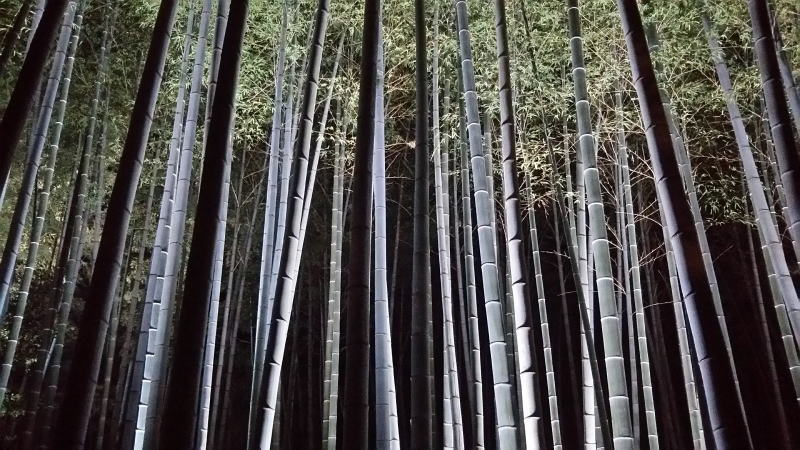 竹林 / 京都 ブログガイド