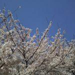 2020年4月 京都イベント情報 / 京都 ブログ ガイド