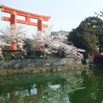京都 桜 洛東 岡崎疎水辺り1 / 京都 ブログ ガイド