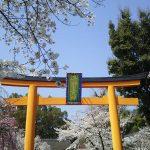 京都 桜 洛中 平野神社1 / 京都 ブログ ガイド