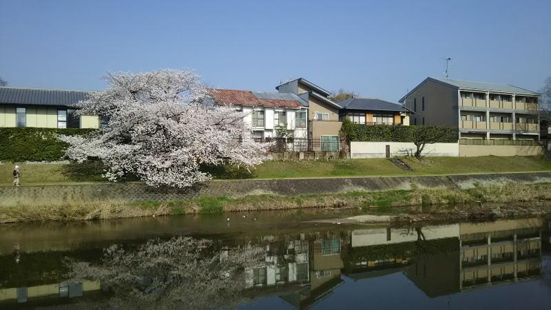 高野川10 / 京都 ブログ ガイド