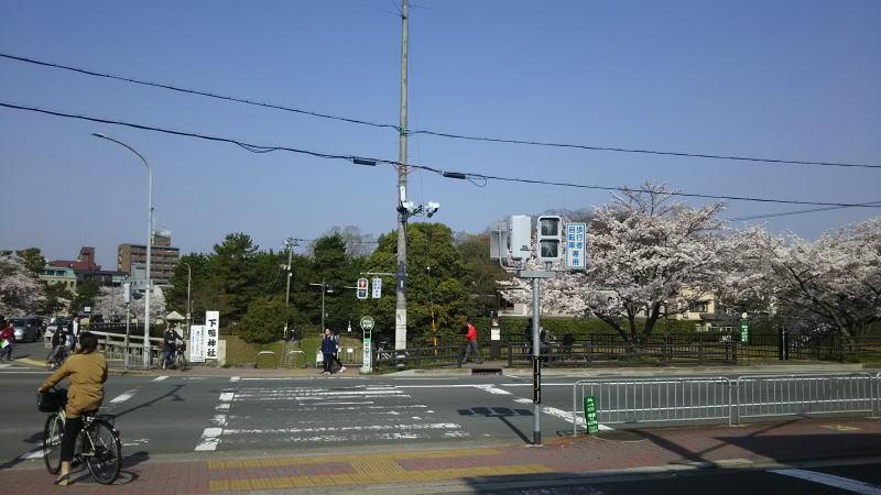 京都 桜 洛北 高野川2 / 京都 ブログ ガイド