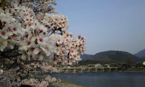 京都 桜 洛西 嵐山 / 京都 ブログ ガイド