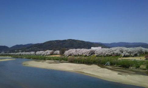 八幡 背割堤 桜 / 京都 ブログ ガイド