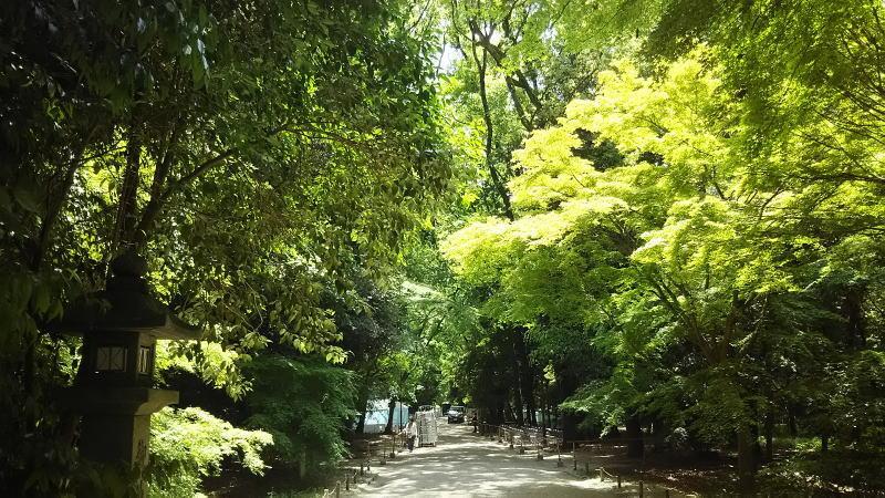 糺の森 / 京都 ブログ ガイド
