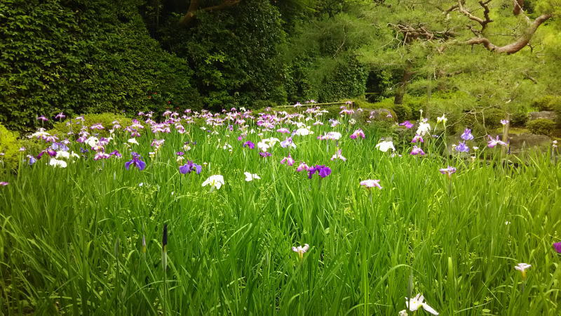 平安神宮 神苑4/ 京都 ブログ ガイド