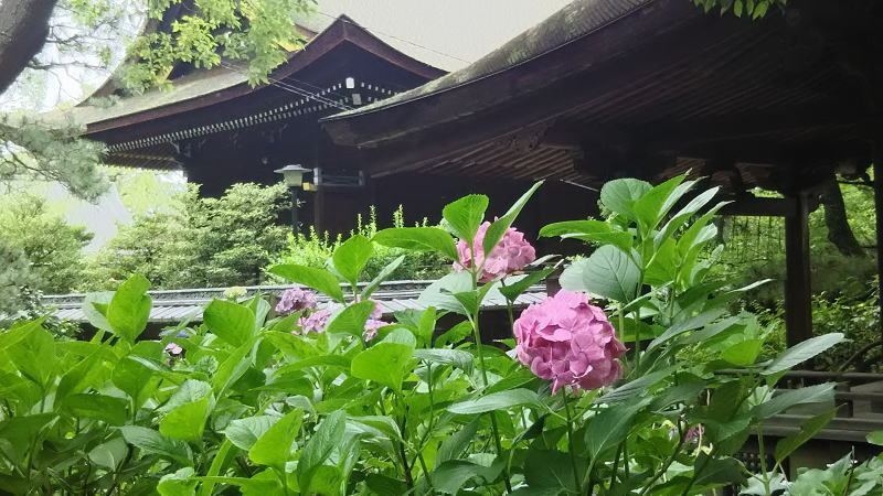 藤森神社18 / 京都 ブログ ガイド