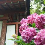 藤森神社19 / 京都 ブログ ガイド
