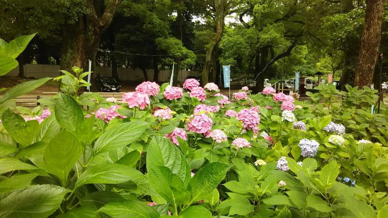 藤森神社11 / 京都 ブログ ガイド