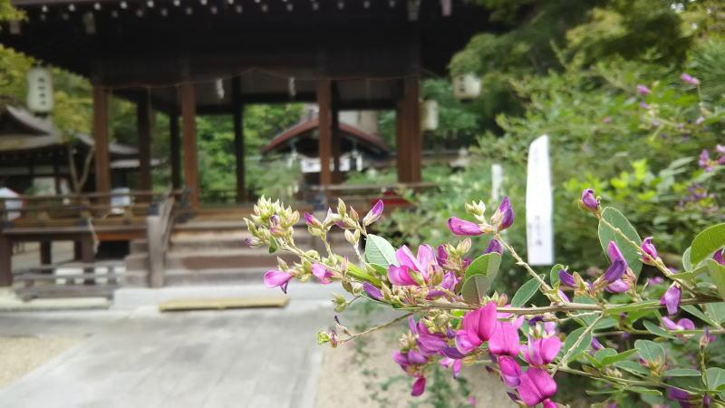 梨木神社 萩まつり 6/ 京都 ブログ ガイド