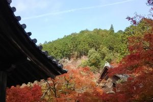2019年11月 京都イベント情報 / 京都 ブログ ガイド