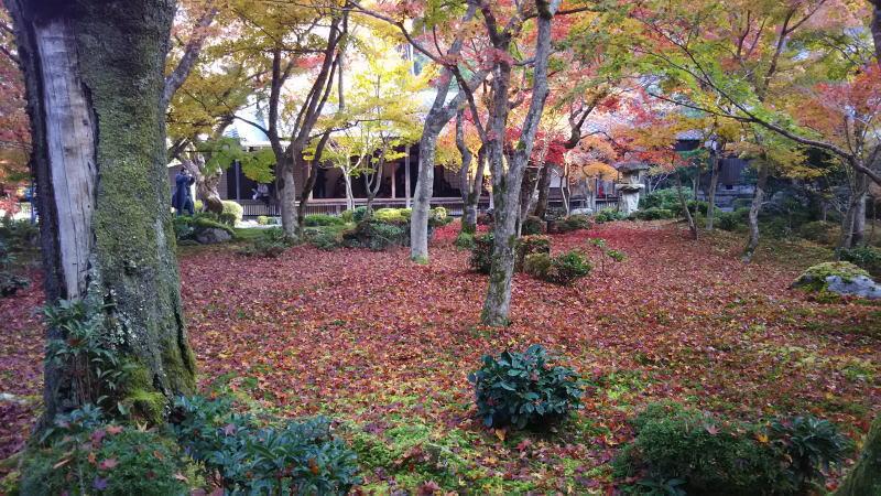 圓光寺2018 / 京都 ブログ ガイド