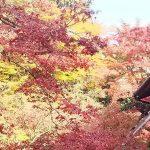 実相院 2018 / 京都ブログガイド