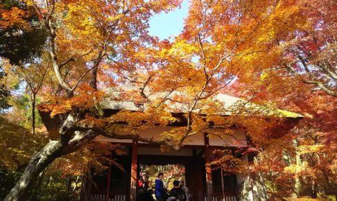 常寂光寺 2018 / 京都 ブログ ガイド