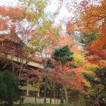 今熊野観音寺 2018 / 京都 ブログ ガイド