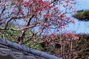 2019年3月 京都イベント情報 / 京都 ブログ ガイド