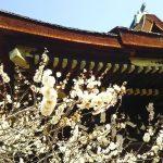 2020年3月 京都イベント情報 / 京都 ブログ ガイド