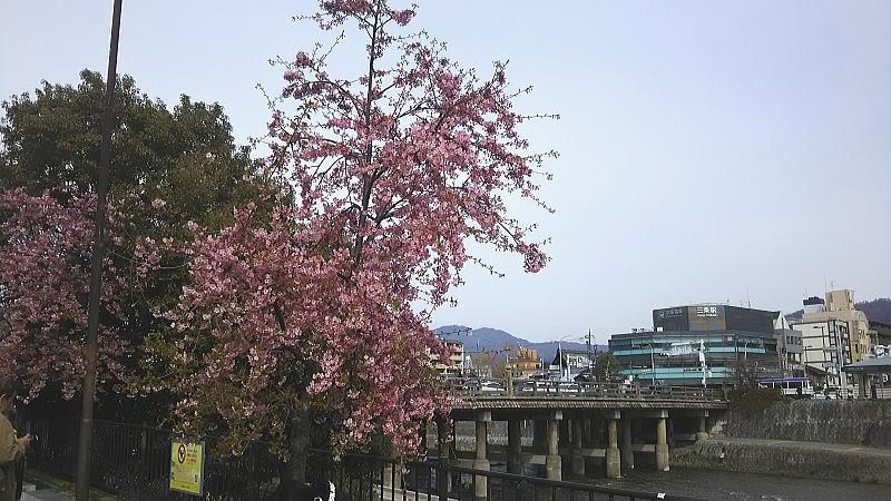 京都 観光・旅行 / 京都 ブログ ガイド