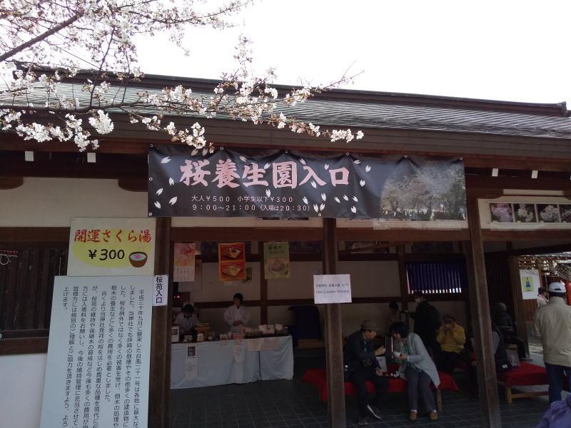 桜養生園 / 京都 ブログ ガイド