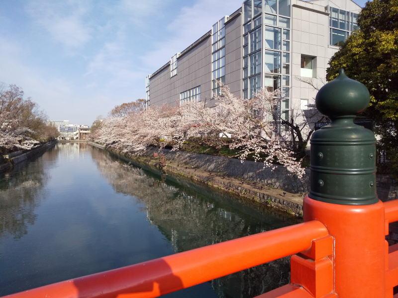 京都 桜 洛中 岡崎疎水 2019 / 京都 ブログ ガイド