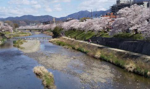 京都 桜 洛東 高野川 2019 / 京都 ブログ ガイド