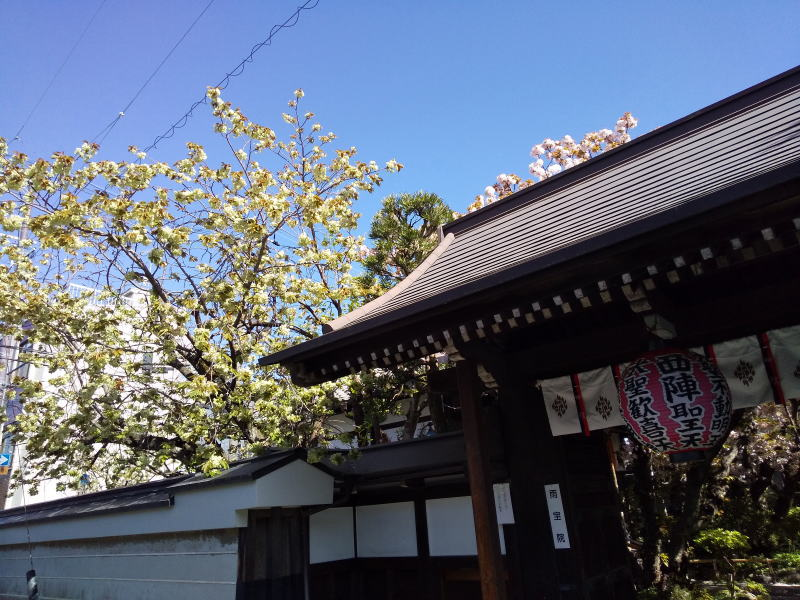京都 桜 洛中 雨宝院 2019 / 京都 ブログ ガイド