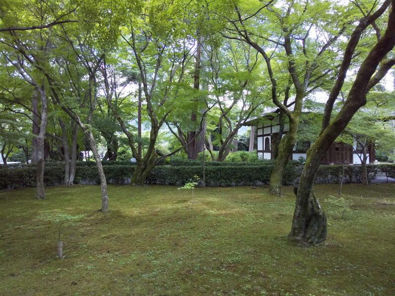 本堂裏の庭