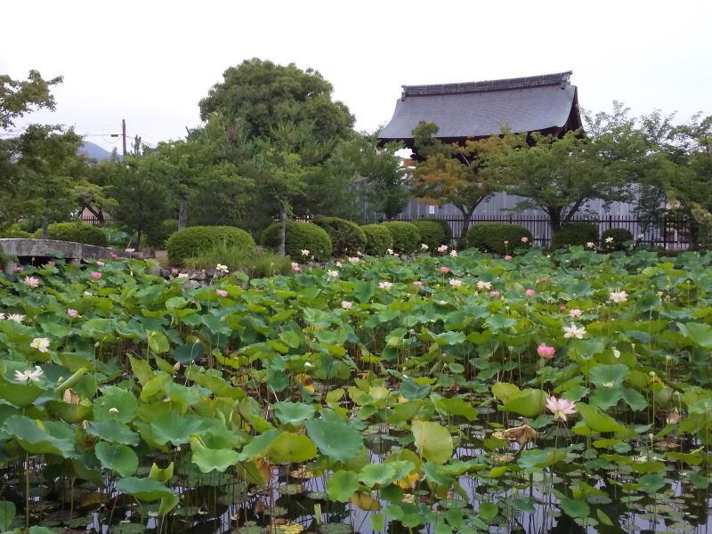 放生池の蓮 / 京都 ブログ ガイド