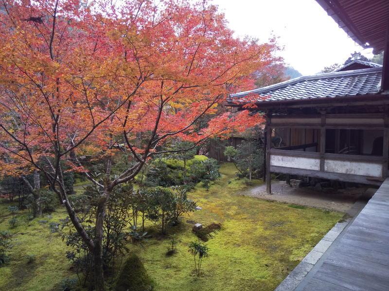 西明寺 苔庭/ 京都 ブログ ガイド
