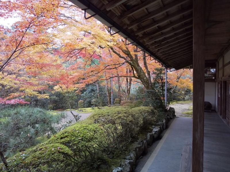 客殿からの眺め / 京都 ブログ ガイド