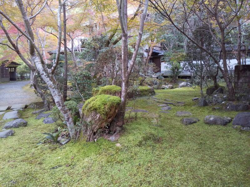 裏口手前の庭 / 京都 ブログ ガイド