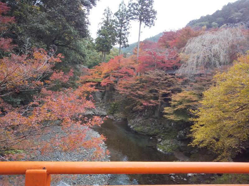 橋から上流の眺め / 京都 ブログ ガイド
