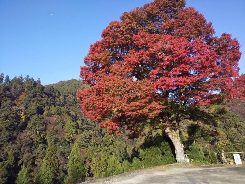 高雄バス停辺り / 京都 ブログ ガイド