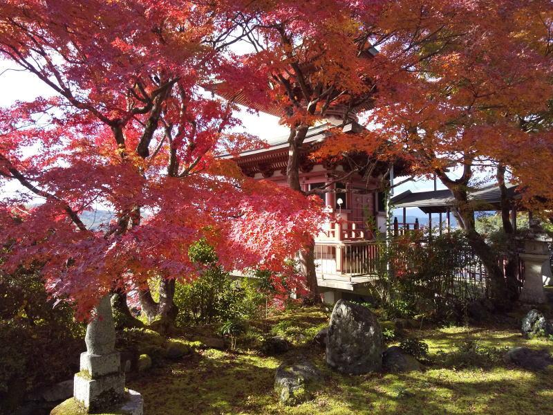 紅葉と多宝塔 / 京都 ブログ ガイド